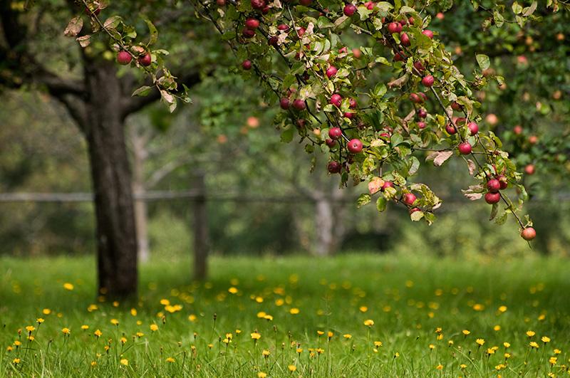 http://shams212a.persiangig.com/image/13.jpg